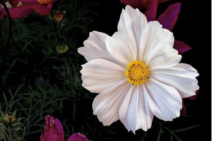 perennial flowers white flower