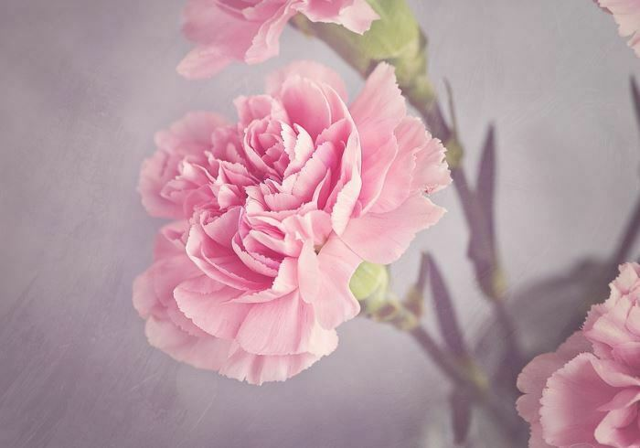 25 Most Beautiful Pink Flowers With Pictures 187 Jessica Paster