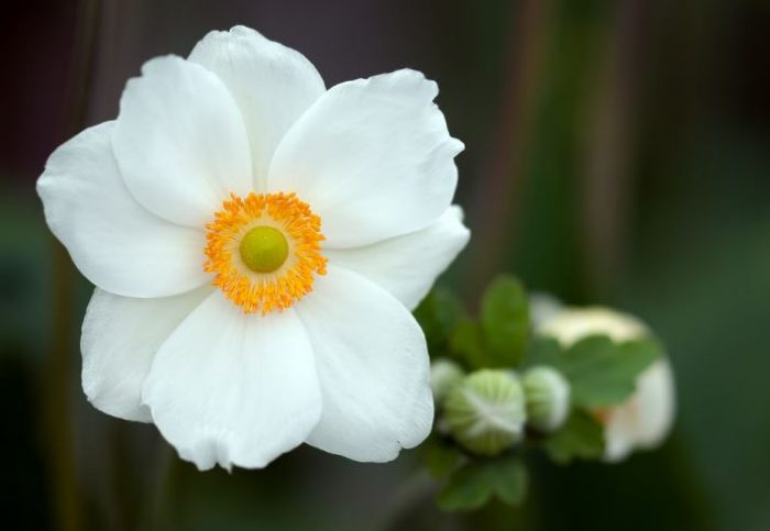 Top 35 Most Beautiful White Flowers With Pictures Jessica Paster
