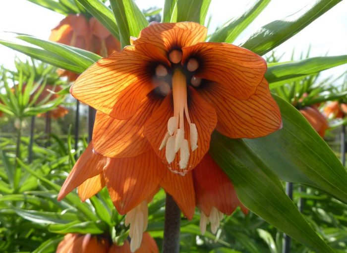 beautiful flowers crown flower