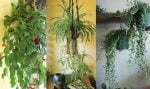 15+ Beautiful Hanging Plants Ideas | Indoor & Outdoor