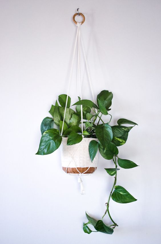 best hanging plants indoor