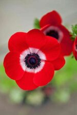 √ Top 35 Most Beautiful Flowers In The World | A-Z | HD IMAGES