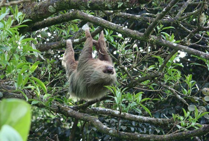 pictures of animals that start with s - sloth