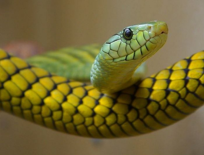 animals that start with the letter s snake