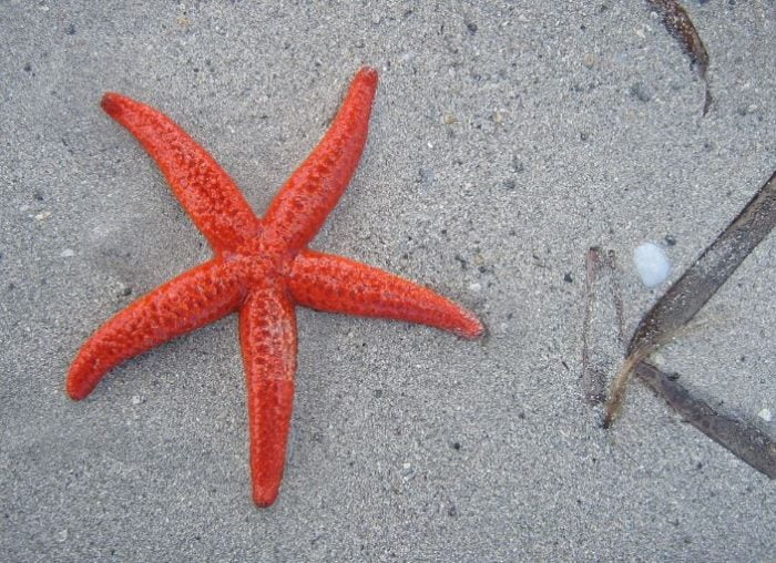 starfish - animals r